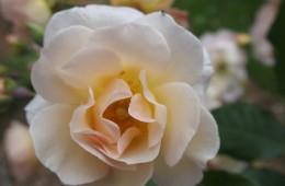 Aromatherapie Fragrance