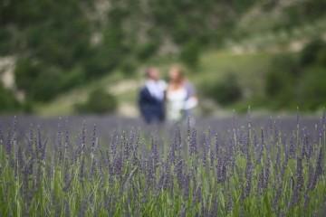 lavandin veld