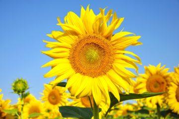 Symboliek van bloemen en planten