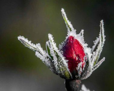 bevroren liefde